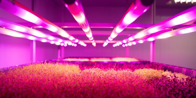 Vertical farm: Brazilian Pink Farms grows to new heights